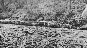 Copperhill logging
