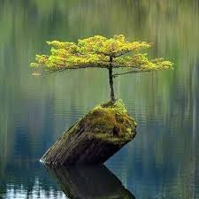 tree on stump in water